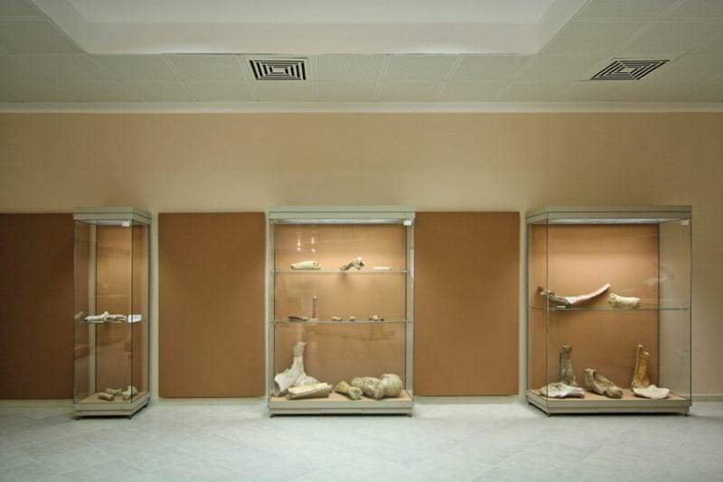 Παλαιοντολογικό Ιστορικό Μουσείο
