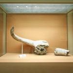 museum ptolemaida